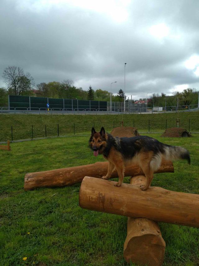 Pierwszy w Krośnie park dla psów,